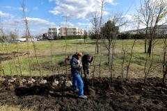 2021_04_27_sadzenie_drzew_polna_018